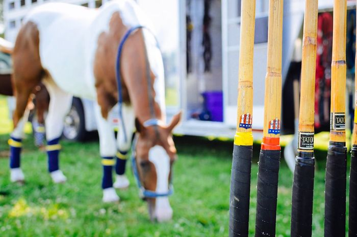 Real People Sport Men Leisure Activity Outdoors Day Lifestyles Standing Grass Low Section Competition Competitive Sport Horse Mallet Polo Horseback Riding Teamwork Athlete Close-up Adult People
