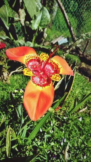 Ilusión de un sólo día. Flower Nature Fragility Beauty In Nature