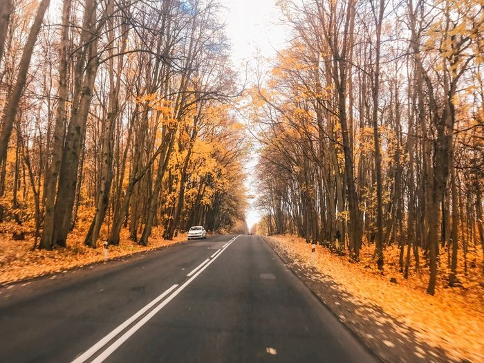 Tree Transportation Road The Way Forward Direction Plant Diminishing Perspective Road Marking Land Vehicle Motor Vehicle vanishing point No People Beauty In Nature Mode Of Transportation Growth Marking Symbol Nature Sky Car