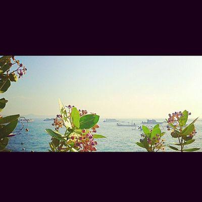 Purple power Beach Balibeach Sanurbeach Sanur Landscape Picoftheday Photoarena_sunset Photooftheday Jalan2men Fascinatingbali Ig_masters Instasunda Instafollow IGDaily Instanusantarabali Ighub Instalike Instahub Khwl Instadaily Igers Bali INDONESIA Photosunday