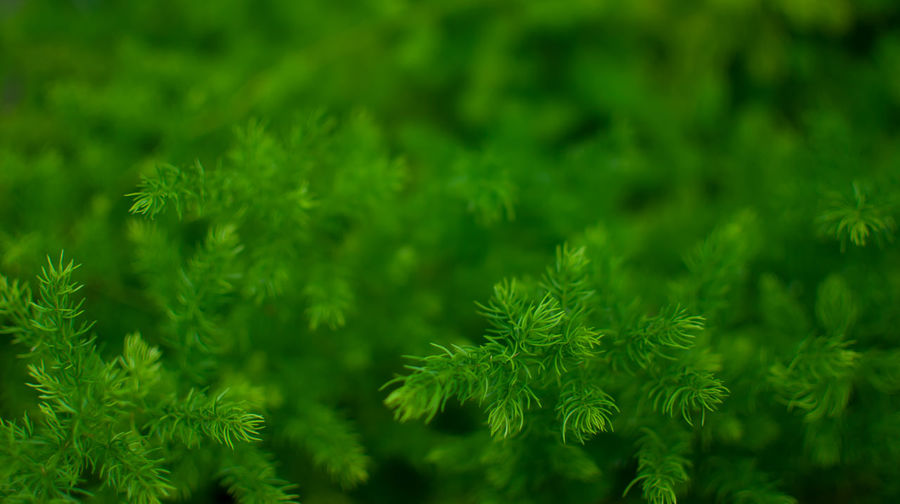 Close-up Fressness Green Color Nature Nature Details Nature_collection Plants