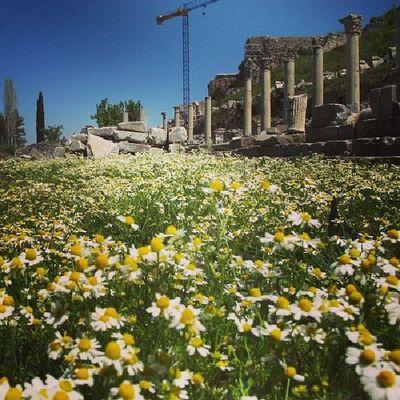 Tarih  Efes Izmir Arşiv papatya