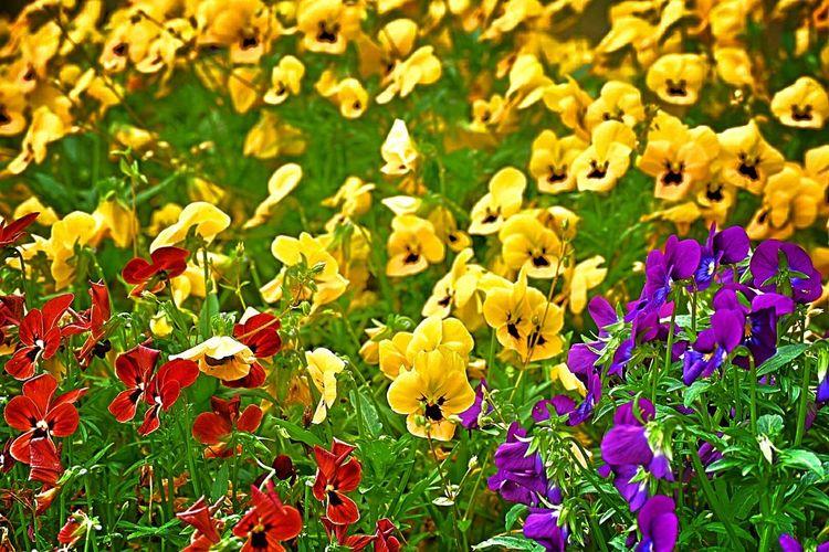 Flower Nature