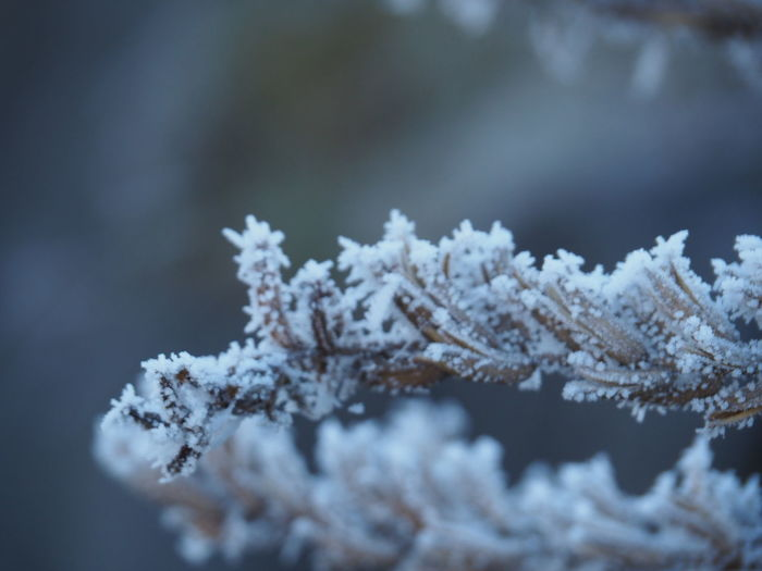 Beauty In Nature Close-up Cold Temperature Day Frozen Growth Ice Ice Crystal Nature No People Outdoors Snow Snowflake Tree Weather Winter