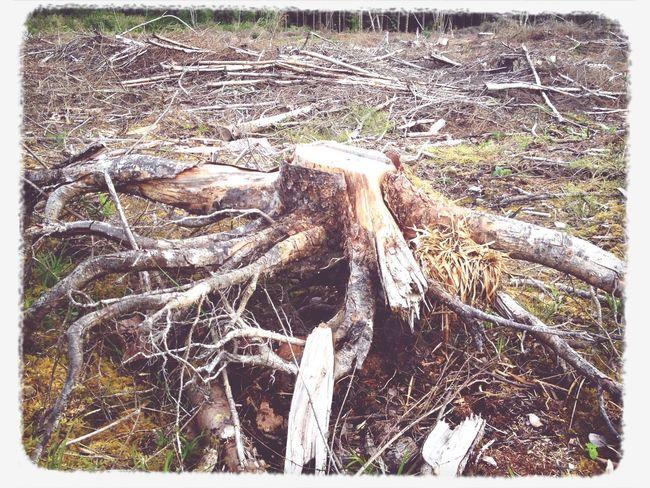 Tree stump Taking Photos Walking Around