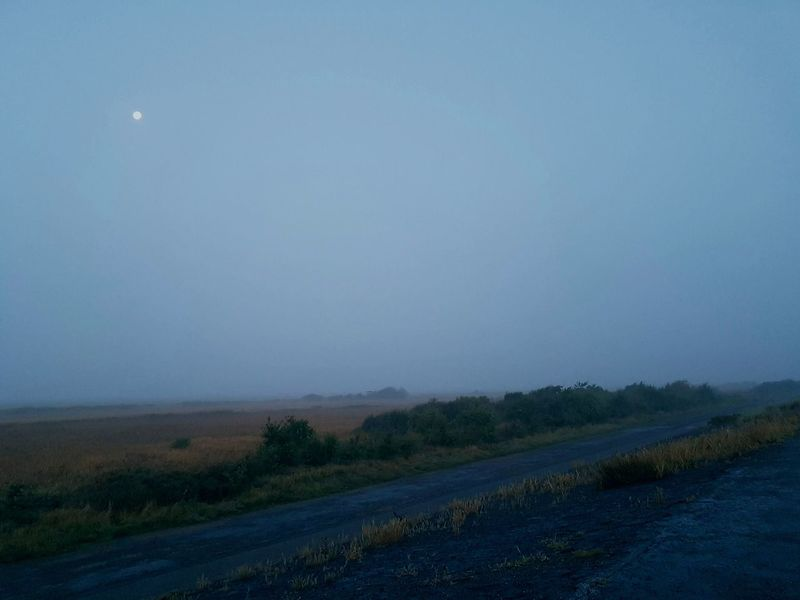 Early Morning Early Bird Early Running Foggy Morning Beauty In Nature Freshness Foggy