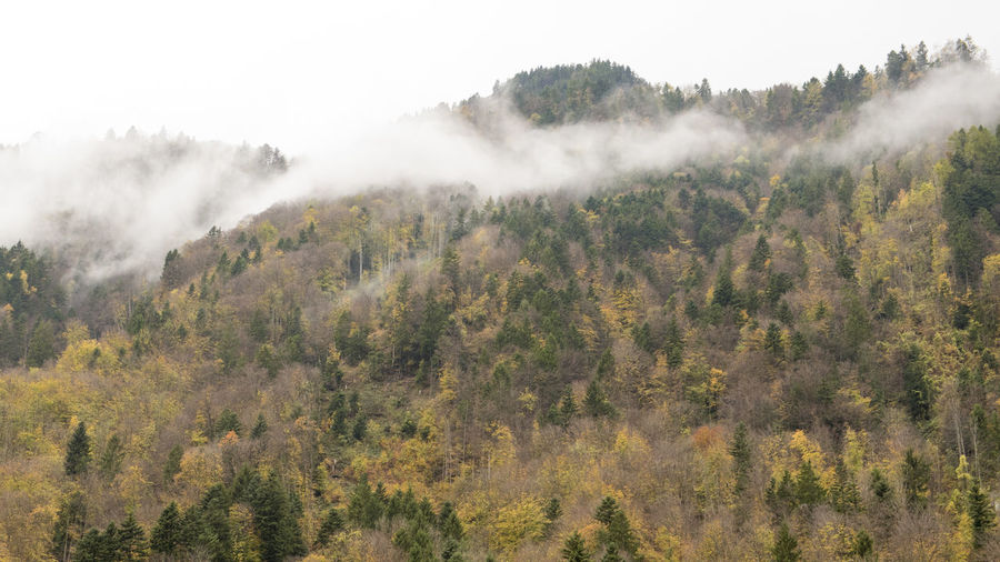 Beauty In Nature Day Fog Forest Landscape Mountain Nature No People Outdoors Scenics Sky