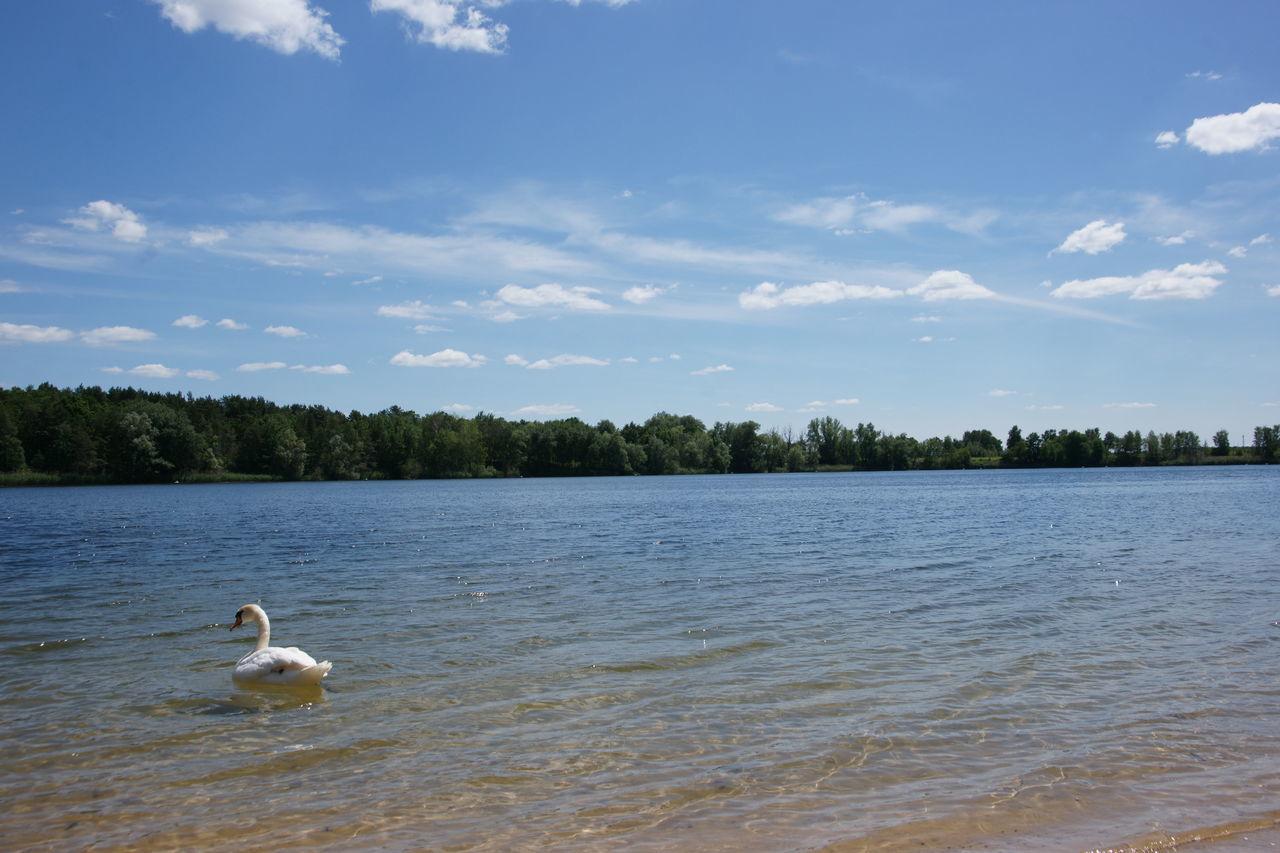 White Swan Swimming In Flughafensee Lake Against Sky