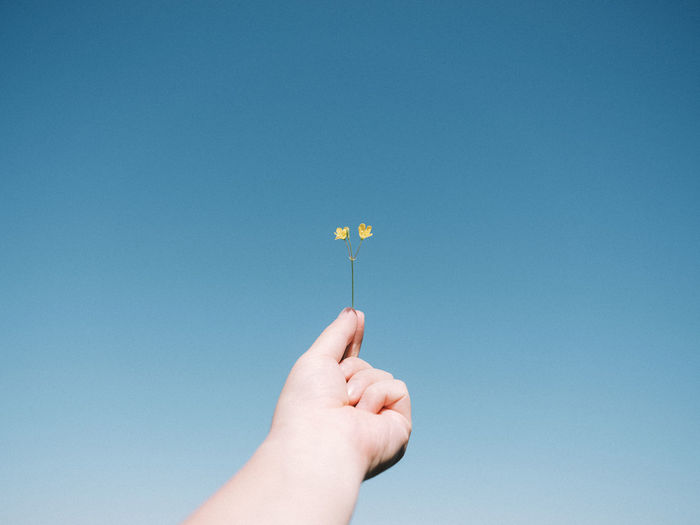 Hand holding blue flower against clear sky