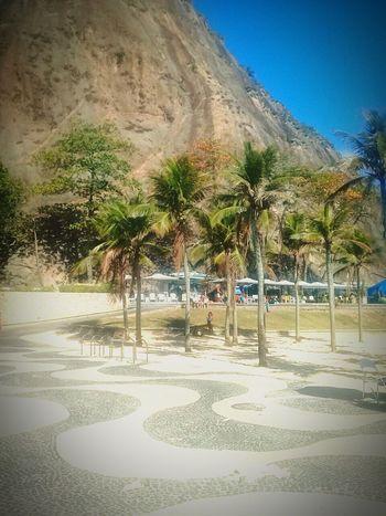 Pedradoleme LeMe Beach Palm Tree Clear Sky Nature Goodday ♡ First Eyeem Photo