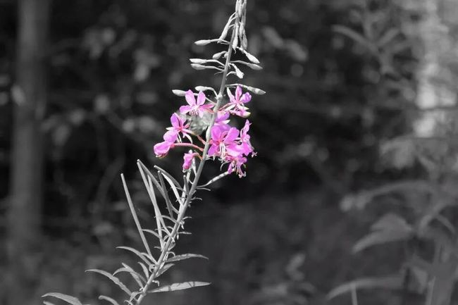 Black And White Photography Flowers Nature