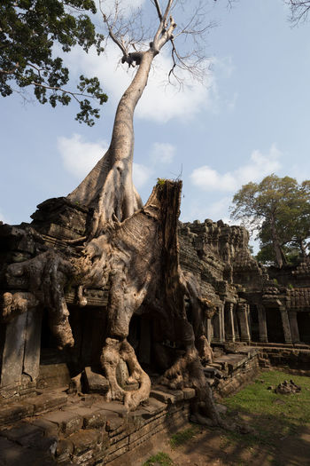Angkor temple complex, Cambodia Ancient Civilization Angkor Cambodia Enjoying Life Eroded History Nature Rough Ruined Siemreap Stone Temple Tombraider Travel Tree Tree Trunk