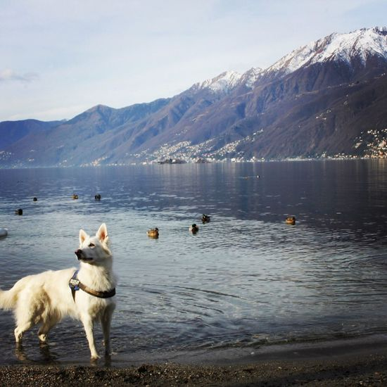 Water Pets Dog Animal Themes Nature Mountain Domestic Animals One Animal Sky Outdoors Beauty In Nature Mountain Range No People Switzerland Switzerland Alps