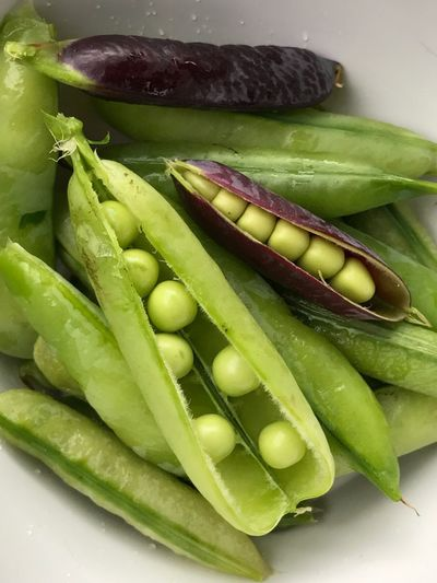 Brienenoordeiland Peasinapod Peas Marrow Marrow-vegetable Green Color Freshness Vegetable Healthy Eating Raw Food High Angle View Close-up Capucijners Freshness Multi Colored