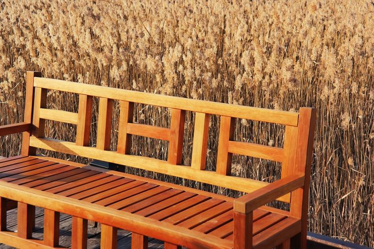 Travel Photography Wood - Material Wood Chair Outdoors No People Nature Sunset Korea Korea Trip Vacations Fall Fall Colors Fall Season Lonely Nature Photography Nice View Trip Beauty In Nature Samsungcamera NX300M Nice Day Favorite Places Beaitiful Moment Sunshine Hsun