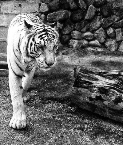 Animals Bw_collection EyeEm Best Edits