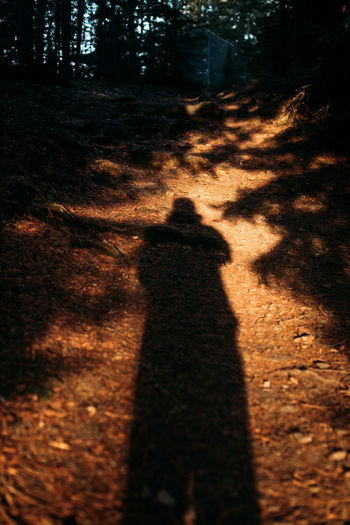Long shadow of person standing in forest.