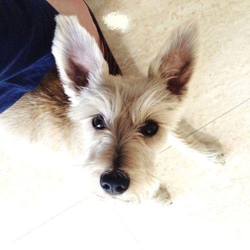 Happy that the bath is over!!! AdoptDontShop Adoptadog Adoptanocompres Bath Time Pets Pet Photography  Happy