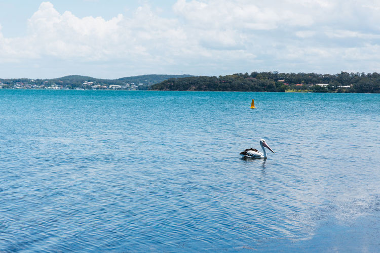 Beauty In Nature Blue Cloud - Sky Day Lake Macquarie Nature Nautical Vessel One Person Outdoors People Real People Scenics Sea Sky Water Waterfront