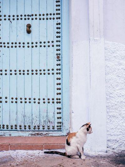 Dog in front of door