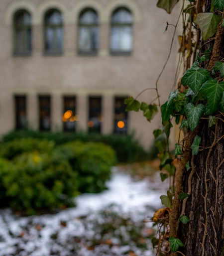 Built Structure Architecture Plant Nature Tree No People Day Green Color Focus On Foreground Selective Focus Plant Part Leaf Bokeh Bokeh Photography Bokehlicious Efeu Nature_collection Nature Photography Light Trees Poland Poznań
