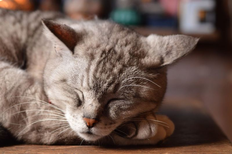 sleep( ˘ω˘ ) Cat Cats Cat Lovers Sleeping 猫 Nikon Nikon D3200 Nikonphotography Relaxing