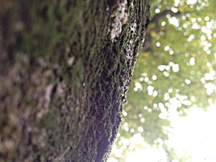 Baum mit moos von unten Pflanze  Nature Sky And Trees Moose