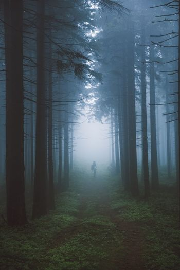 Misty morning Land Plant Forest Tree Fog Nature Beauty In Nature Tranquility Tranquil Scene Scenics - Nature WoodLand Non-urban Scene Landscape Outdoors Mystery Day Spooky Environment No People