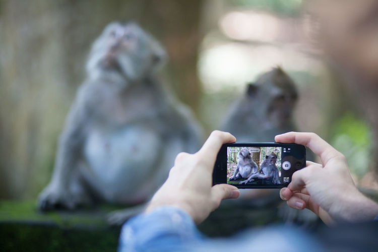 Close-up of photographing monkeys with mobile phone