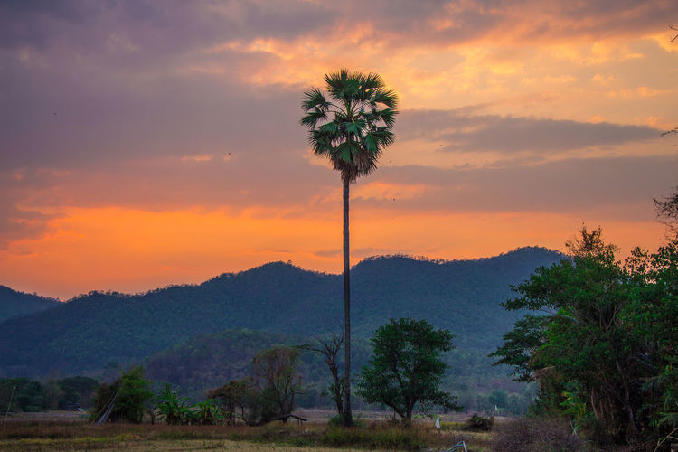 Nature Tree Sky Plant Cloud - Sky Sunset Beauty In Nature Nature Palm Tree Land Mountain No People Orange Color Non-urban Scene Coconut Palm Tree Outdoors Growth Environment Scenics - Nature