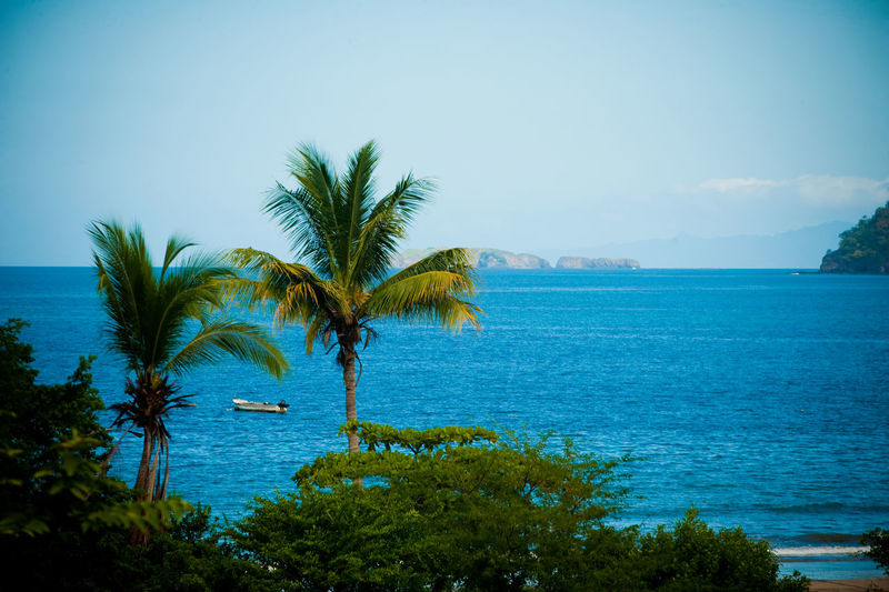 Beautiful view of ocean Beauty In Nature Blue Day Horizon Over Water Nature No People Outdoors Palm Tree Scenics Sea Sky Tranquil Scene Tranquility Tree