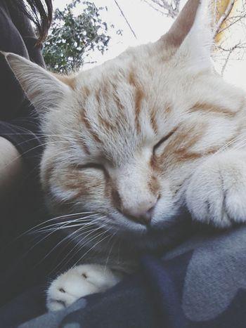 Miao:3 Gatto MicioGatto
