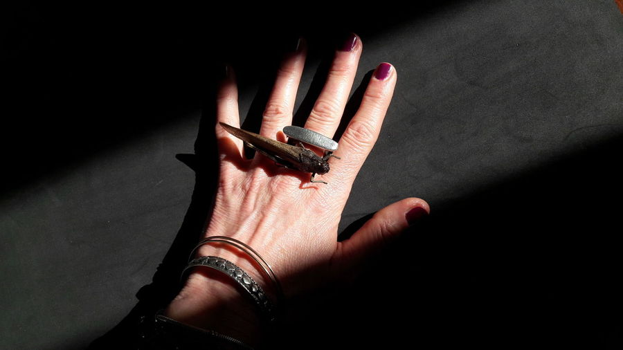 grasshopper on my hand Grasshopper Grasshopper Insect Nature Insect Insect Photography Insect Photo Light And Shadow Woman Portrait Part Of Body Skin Hand Human Hand Nail Polish Fingernail Shadow Close-up Nail Art Ring Manicure Personal Perspective Finger Low Section Red Nail Polish Nail File