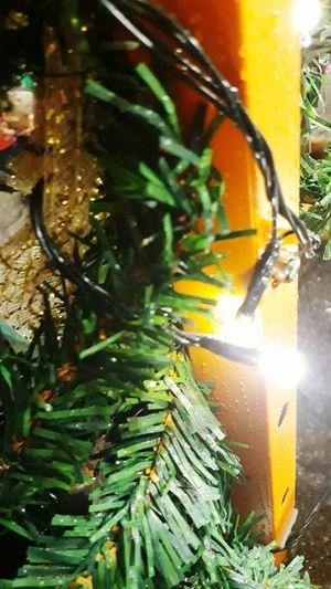 Plant Night Close-up Outdoors Eyeemphotography Celebration Shiny Christmas Decoration