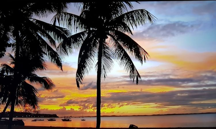 Tree Water Sea Palm Tree Sunset Beach Beauty Multi Colored Silhouette Horizon Coconut Palm Tree Seascape Tropical Tree Island Romantic Sky Dramatic Sky Palm Leaf Coast Tropical Climate Coconut Lagoon