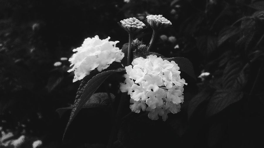 Flower Close-up Nature Indoors  Low Angle View Beauty In Nature Tree Nature Blackandwhite Beauty In Nature No People Da  Day Fragility