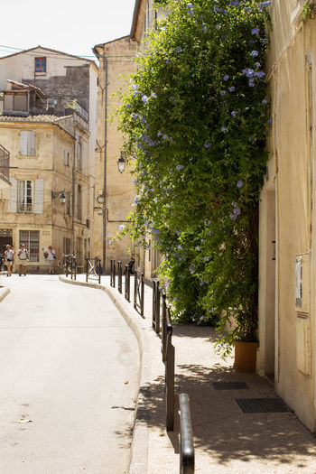 A street in the Old town, Arles Architecture Building Exterior Built Structure City City Life Creeper Day Empty Road Greenery Outdoors The Way Forward Tourism Town Travel Destinations Tree