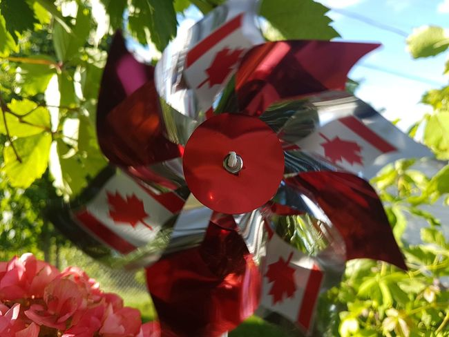Young at heart... Sesquicentennial Canada Day 2017 Canada Coast To Coast Canada, Eh? Canada150 Red And White Iamcanadian Proud To Be Canadian Maple Leaf Pinwheel Capturing Movement Mobile Photography | EyeEm Vision tag suggestions: Red Christmas Celebration No People Close-up Christmas Decoration Tradition Leaf Indoors  Day Tree |