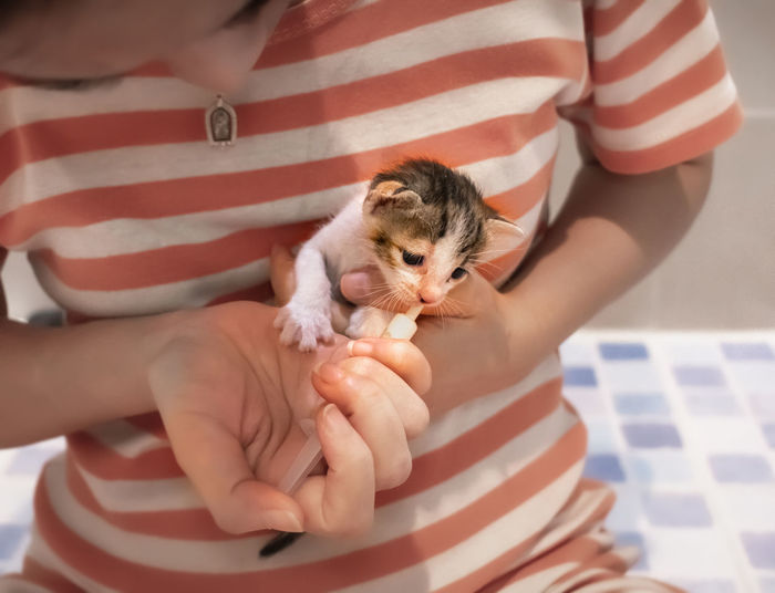 Midsection of woman holding kitten