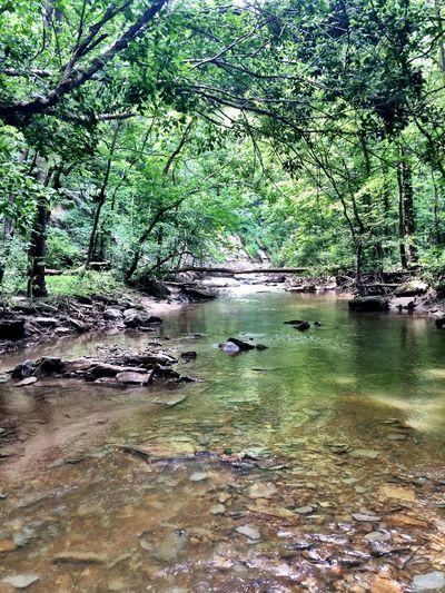 Water Riverside Trees Nature TurkeyRun