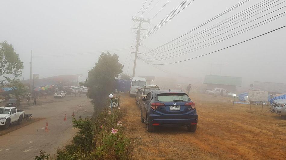 The mist Tree Rural Scene Spraying Agriculture Wet Social Issues Fog Car Field Rain