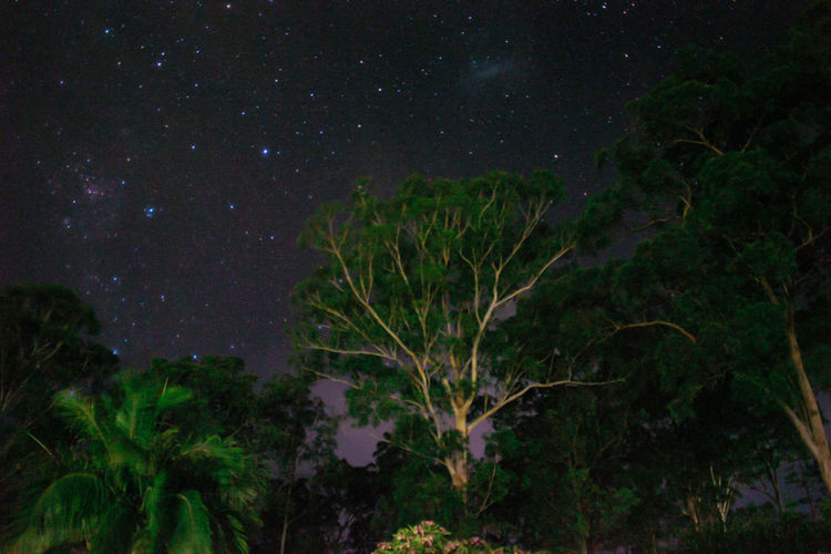 Night Star - Space Sky Astronomy Nature Beauty In Nature Low Angle View Tree Space And Astronomy Scenics Constellation Outdoors No People Growth Star Field Illuminated Wauchope EyeEmNewHere Long Exposure Backgrounds Lights Branch