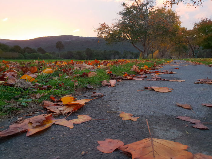 Surface level of dry leaves on land against sky during autumn