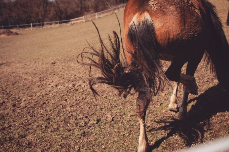 Rear view of horse on field during sunny day