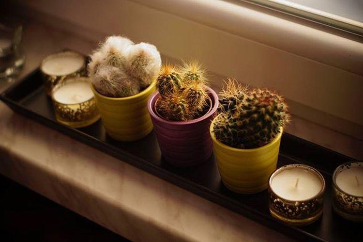 Taca prezentuje się tak☺ Taca Black Parapet Home Homesweethome Kaktusy Kaktus Cactus Swieczki IKEA Bielany Wrocławskie Wrocław Light Homedecor Decor Decorations Beautiful Beauty Dekoracje Polishgirl Poland Likeforlike L4l F4F