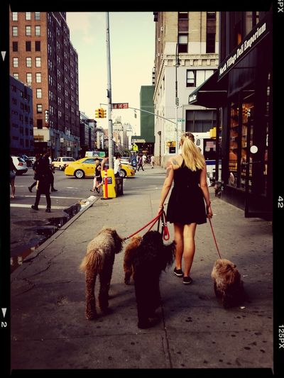 Dog Walking Newyork Street Photography