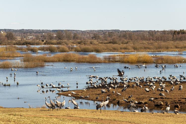 Flock of birds on beach
