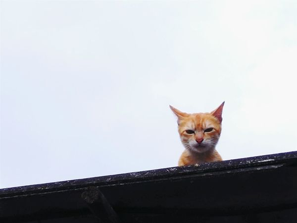 Cat Lovers Cats Of EyeEm OpenEdit Happy Monday Woof ! Have I Got Your Attention? Miao:3