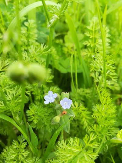 Green Color Nature Plant Flower Leaf Day Growth Biology Nature Reserve Flower Head Close-up Grass Beauty In Nature Freshness No People Fragility Outdoors