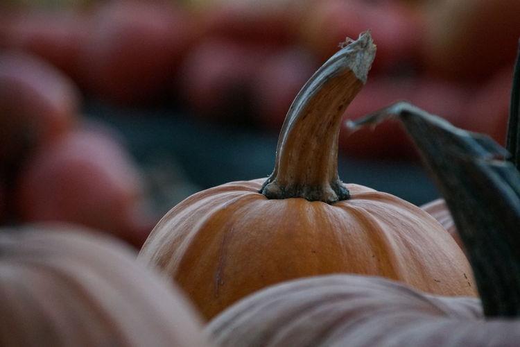 Pumpkins at home